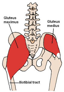 posterior_hip_muscles_3