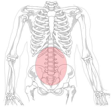 450px-lumbar_region_in_human_skeleton-svg