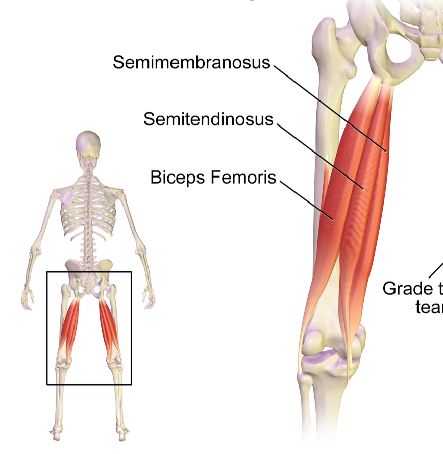 Stretches For The Hamstrings And How To Protect The Si Joints While